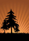 Sunset trees. Abstract ray sunset in nature with pine trees royalty free illustration