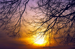 Sunset Trees Ablaze Stock Photos