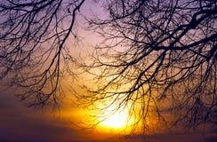 Sunset Trees Ablaze. The sun sets a leafless tree ablaze at sunset Stock Photos
