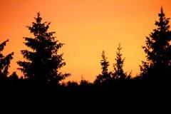 Sunset. Trees against an orange sunset royalty free stock photos