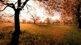 Sunset trees background spring flowers plants nature summertime aerial view stock footage
