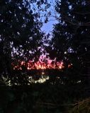 Sunset trees. Blue, red, nature stock photos