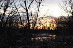 Sunset through the trees on the Boise river Royalty Free Stock Photo