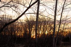 Sunset through the trees on the Boise river Stock Images