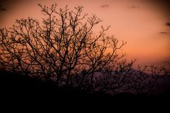 Sunset and trees. Sunset trees branch silhouette red purple colors colours stock photo