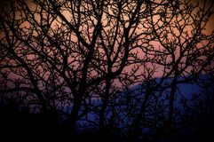 Sunset and trees. Sunset trees branch silhouette red purple colors colours royalty free stock image
