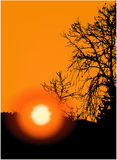 Sunset in trees royalty free stock images