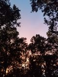 Sunset trees. Colors, aky, sky, pretty stock images