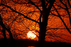 Sunset through the trees Royalty Free Stock Photography