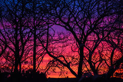 Sunset through trees in Ireland stock images