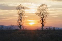 Sunset Trees. Sunset landscape with two trees stock photography