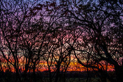 Sunset and Trees like a painting Stock Photos