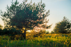 Sunset through trees Stock Photos