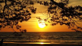 Sunset and trees over sea orange sky Royalty Free Stock Photos