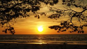 Sunset and trees over sea orange sky Royalty Free Stock Photo