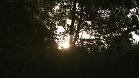 Sunset through the trees stock video footage