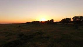 Sunset through the trees in summer - aero stock footage