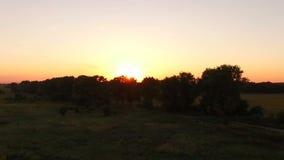 Sunset through the trees in summer - aero stock video footage