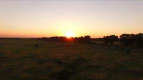 Sunset through the trees in summer - aero stock video