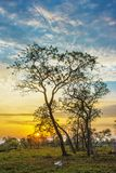 Sunset with Trees, Sun, Sky, Green Vegetation and a Dead Cow in Pantanal, Brazil stock image