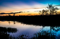 Sunset through the trees of the swamps royalty free stock image