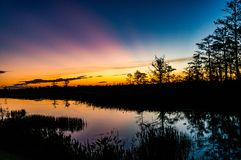 Sunset through the trees of the swamps royalty free stock images