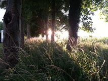 Sunset trees. View sunlight stock image