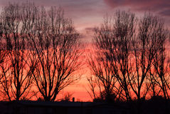 Sunset and trees Royalty Free Stock Images