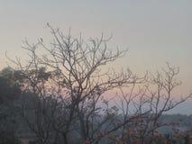 Sunset&trees&-x28; wisząca ozdoba photography&-x29; fotografia stock
