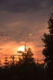 Sunset treetops Stock Image
