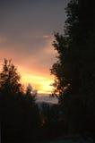 Sunset treetops Stock Photos