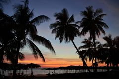 Sunset Tropical Beach. Palm trees silhouette on sunset tropical beach.jpg Royalty Free Stock Image