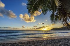 sunset at tropical beach behind palm leaf,anse intendance, seychelles 1 royalty free stock photography
