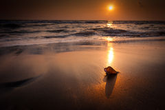 Sunset at tropical beach landscape. Sea shell at the ocean coast. With black sand under evening sun Stock Images