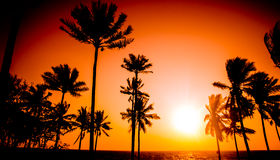 Sunset tropical beach Stock Image