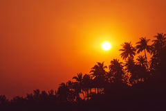 Sunset on tropical beach with palm trees silhouettes stock photos