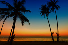 Sunset on tropical beach Royalty Free Stock Images
