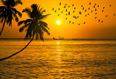 Sunset on tropical beach with silhouette waterbird flying Stock Photos