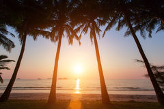 Sunset on a tropical beach with silhouettes of palm trees. Nature. Sunset on a tropical beach with silhouettes of palm trees Stock Photo