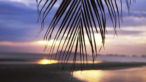 Amazing sunset view on a sea through the branches of a palm tree on a tropical beach. slow motion. 3840x2160. Sunset on a tropical beach. View on a sea through stock video