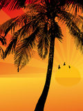 Sunset on a tropical island. Vector illustration Stock Images