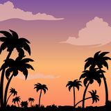 Sunset on a tropical island against a silhouette of palm trees. Evening background image with clouds. Stock Photo