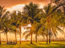 Sunset in tropical island, palms and local boat in West Sumbawa. Sunset in tropical island, palms and local boat in Sumbawa Royalty Free Stock Photo