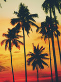 Sunset on a tropical Island Paradise Concept Royalty Free Stock Image