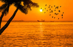 Sunset on tropical sea with silhouette coconut palm trees and fisherman boat  and waterbird flying Royalty Free Stock Photography