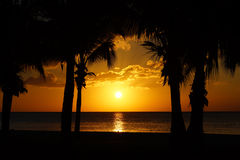 Tropical Sunset with Palm Trees. Golden orange tropical sunset with palm tree silhouettes Stock Photography