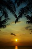 Sunset in tropics. Silhouette of palm trees at sunset in tropics Stock Photography