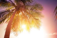 Sunset at tropics with palm trees against amazing colorful sky Stock Photo