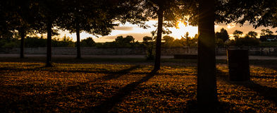 Sunset. Trough the trees in a park Stock Photos