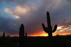 Sunset in Tucson. Saguaro Plant in Tucson, Arizona Stock Photography